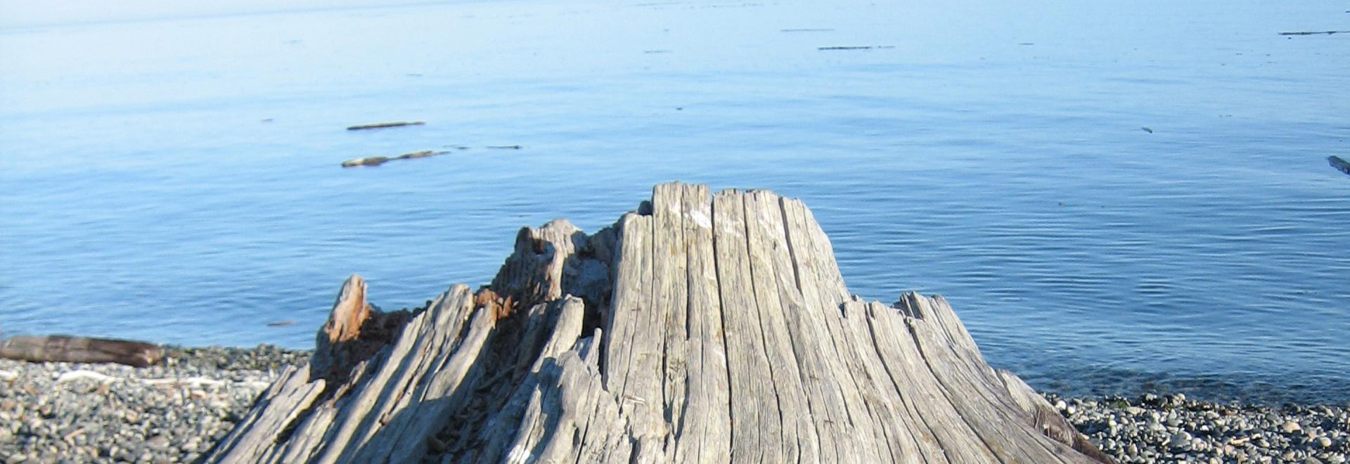 U.S. Tax Victoria - driftwood on the beach